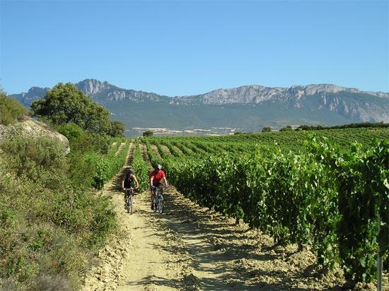 Actividades para disfrutar en el Hotel Wine Oil Spa Villa de Laguardia