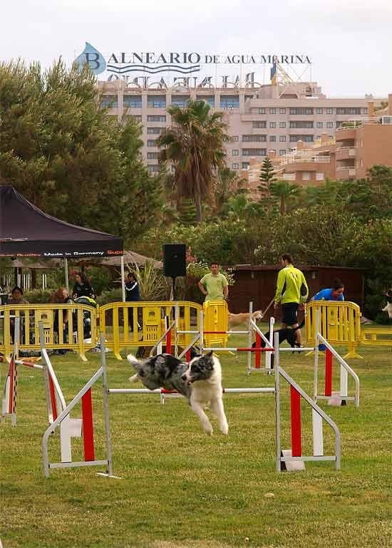 Exhibición canina internacional 2015
