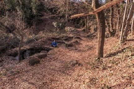 Paseos Meditativos en Bosque